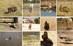 https://bo.quintadosardanito.com/fileuploads/NOTICIAS/thumb_herdadedosardanito_costavicentina_zambujeiradomar_alentejo_turismo_rural_quinta.jpg